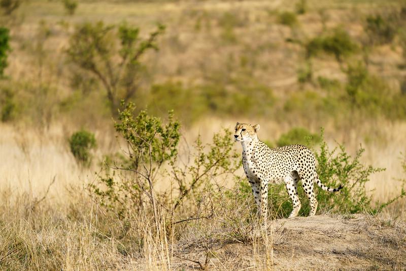 LeopardHills-20171022-0264.jpg