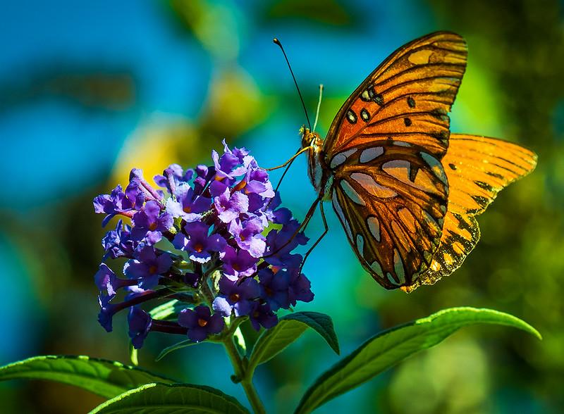 San Diego Botanical Gardens - Butterfly 2.jpg