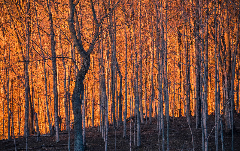 """""""Fire in the trees"""" www.rajguptaphotography.com"""