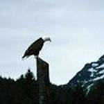 Eagle cropped.JPG