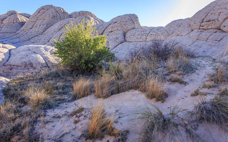 Utah-AZ ahoot-0963.jpg