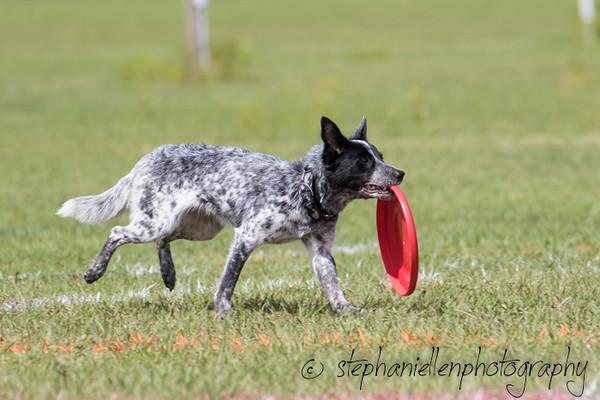 _MG_2865Up_dog_International_2016_StephaniellenPhotography.jpg
