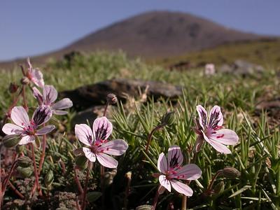 Spain: Sierra Nevada