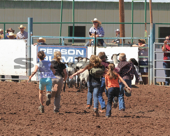 2013 Klickitat County Fair & Rodeo Sheep Dressing