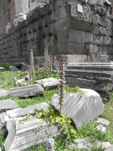 Forum gardens.jpg