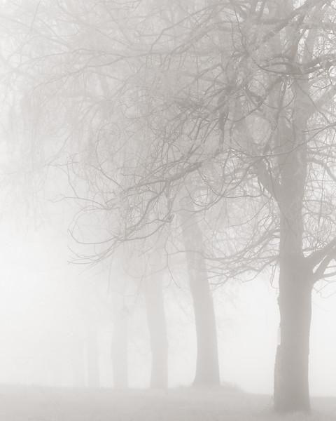 FogTrees.jpg