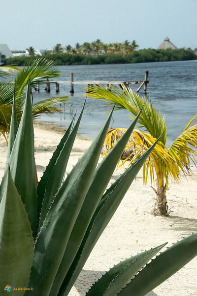 Cancun-5134.jpg