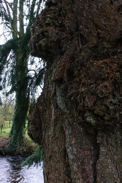 Blarney Castle_Blarney_Ireland_GJP01749.jpg