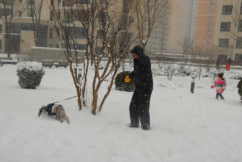 [20100103] 1st 2010 Snow in Beijing (49).JPG
