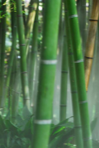 Bambus V.1