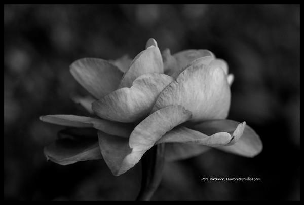 Flowers at Biltmore Estate
