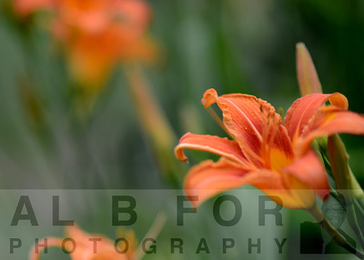 Jun 16, 2013 P3 Project, Training, Flowers, 85mm lens, F/1.8