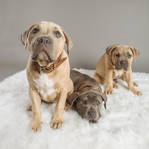 badap-puppies-15.jpg