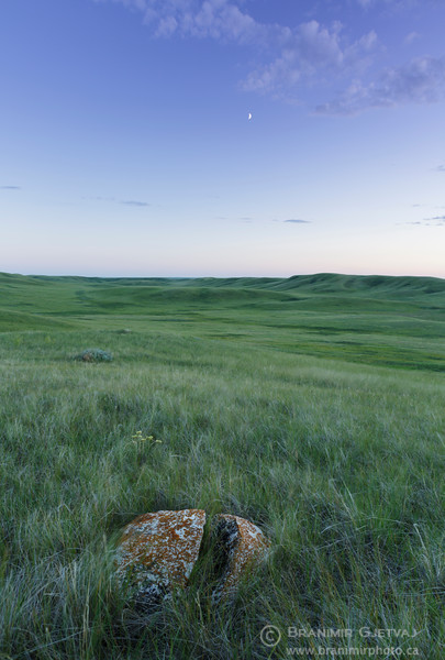 Boulder in native prairie at Fairview PFRA community pasture. Near Fiske, Saskatchewan