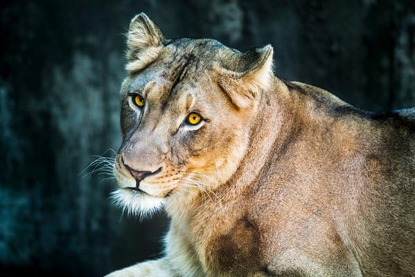 200209 National Zoo