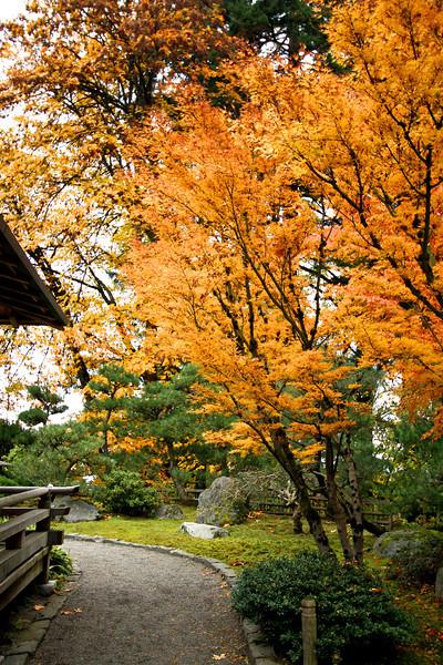 Portland Japanese Garden  11-11-11  3547.jpg