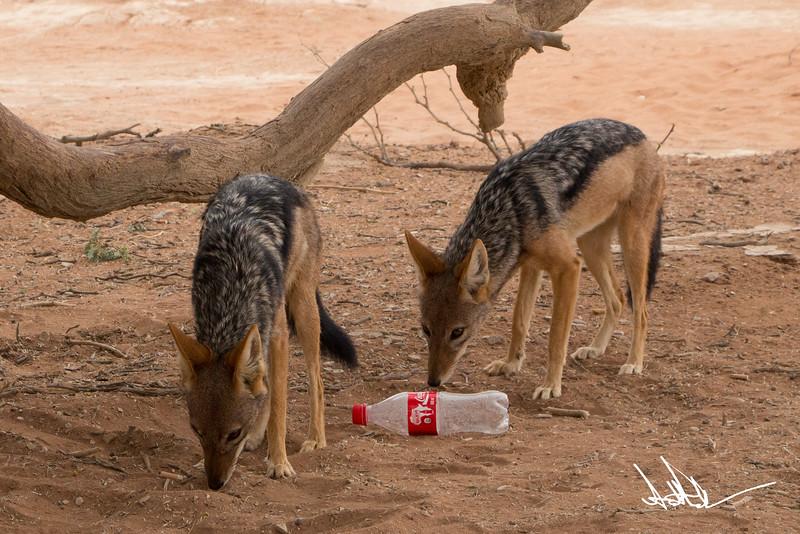 Hyena-Jackel S-1.jpg