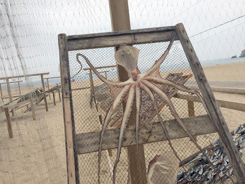 Squid_04.jpg