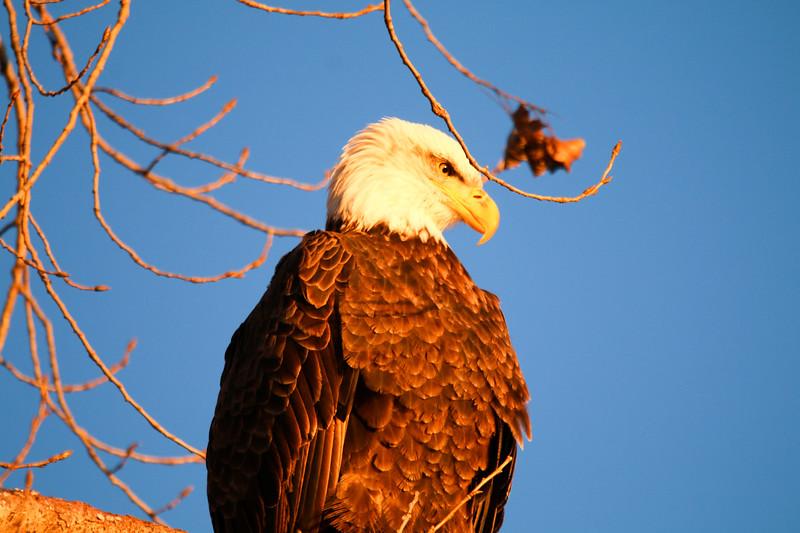 2-18-17 Eagle Final-33.jpg