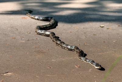 20150606-CCC-Snake-Birds