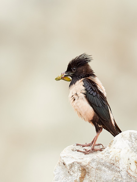 Rosy Starling - where did I leave the kids?