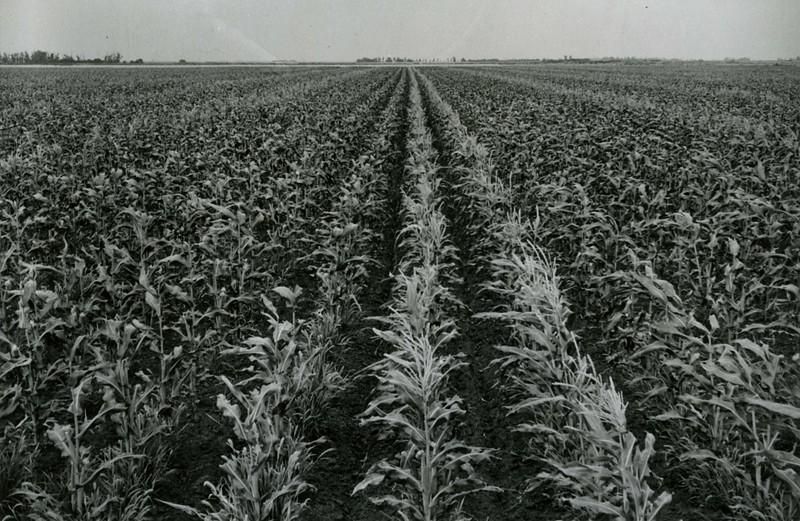 JA147.  Crop - Arthur - 1940‡.jpg