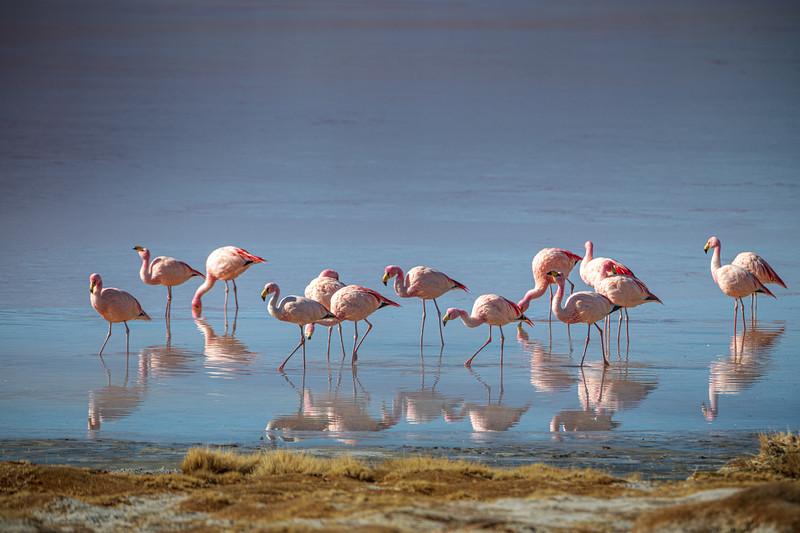 Salt Flats tour - Laguna Colorada - Red Lagoon-2518.jpg