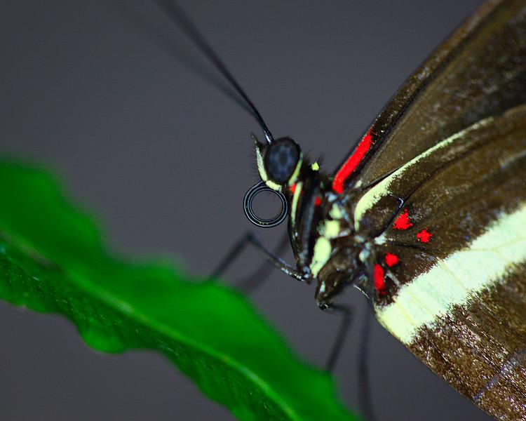 Butterfly 04.jpg
