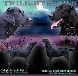 Twilight Star's It's -Wurf * 10.Januar 2021