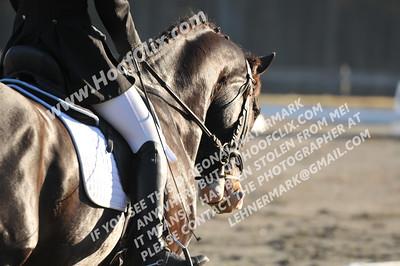 151129 USEA Horse Trial