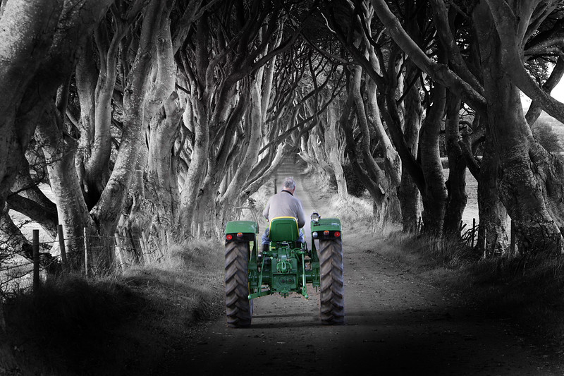 Trees Tractor color.jpg