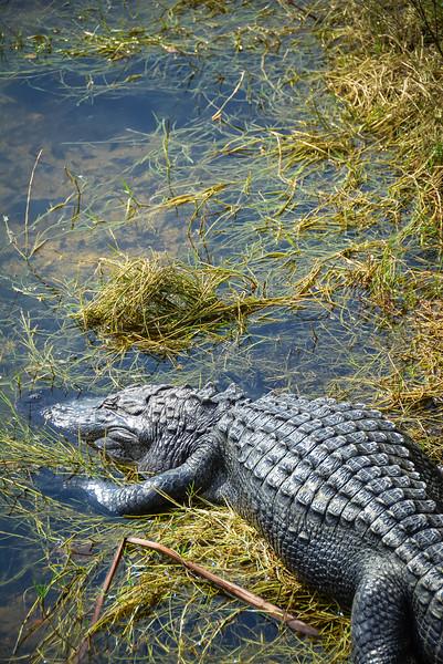 Everglades-22.jpg