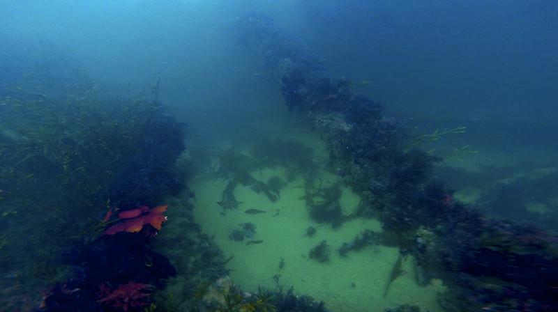 Devon-Underwater-4.jpg