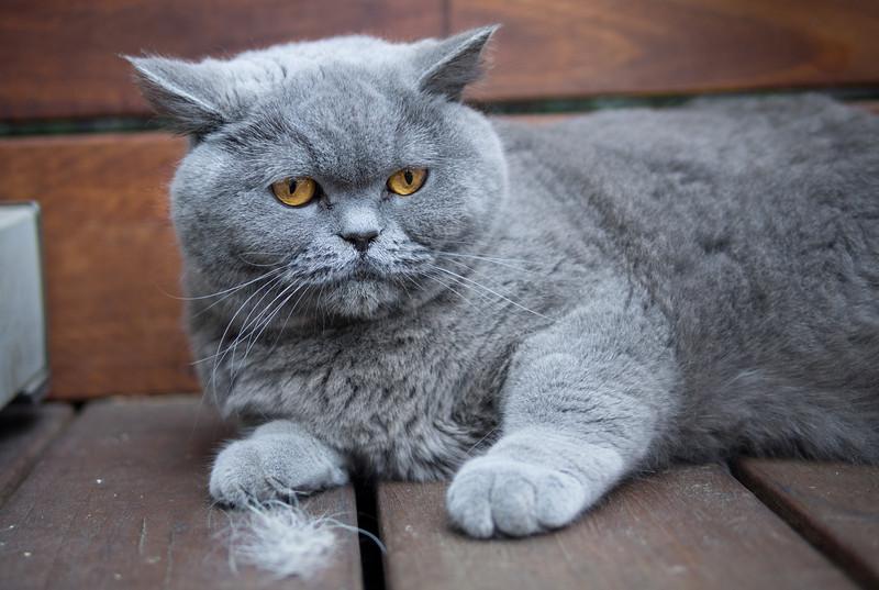 S&B's cat.