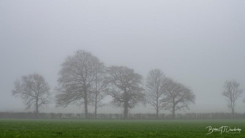 Foggy Hassocks-6923.jpg