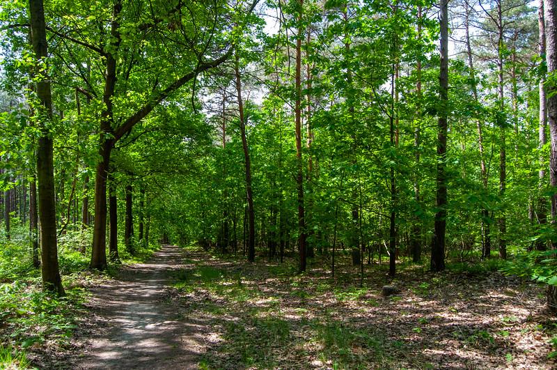 Nationaal Park Hoge Kempen - Duinengordel, omgeving Donderslag 12.jpg