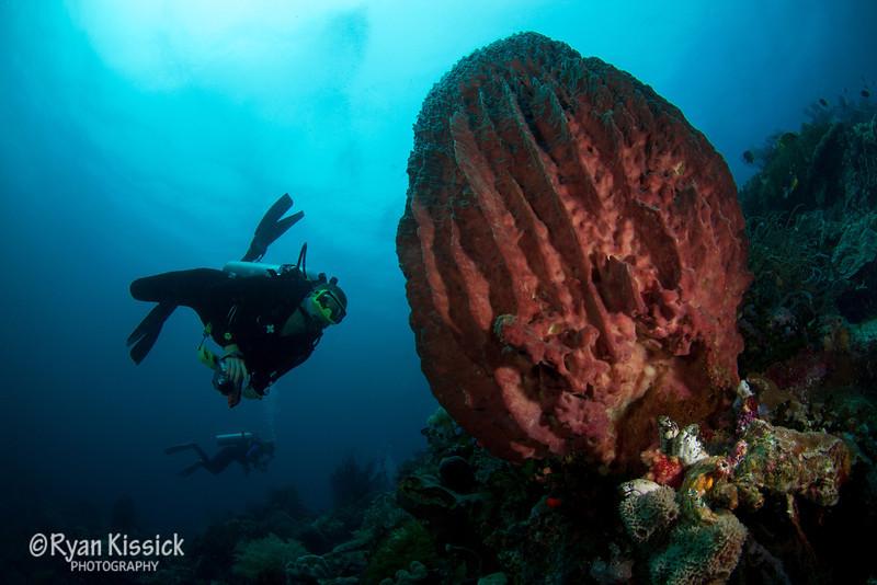 Divers admiring a huge barrel sponge