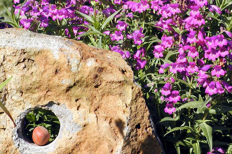 wildflowers23.jpg