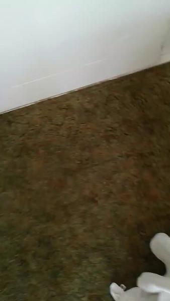 León fall 2016 videos