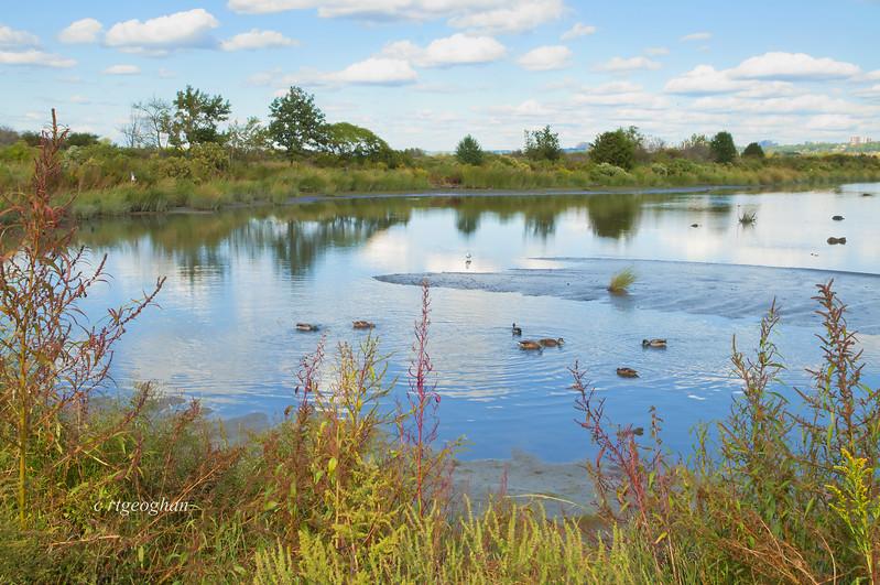 Sept 24_Mill Creek Marsh_0457.jpg