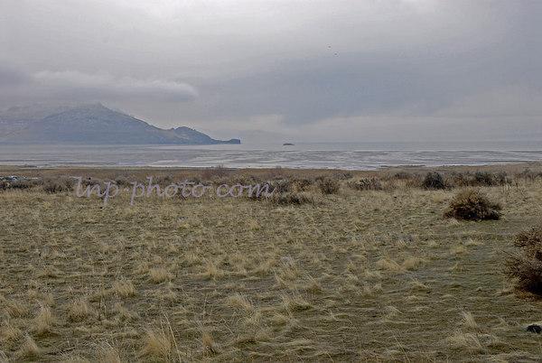 2006 Antelope Island Buffalo Run
