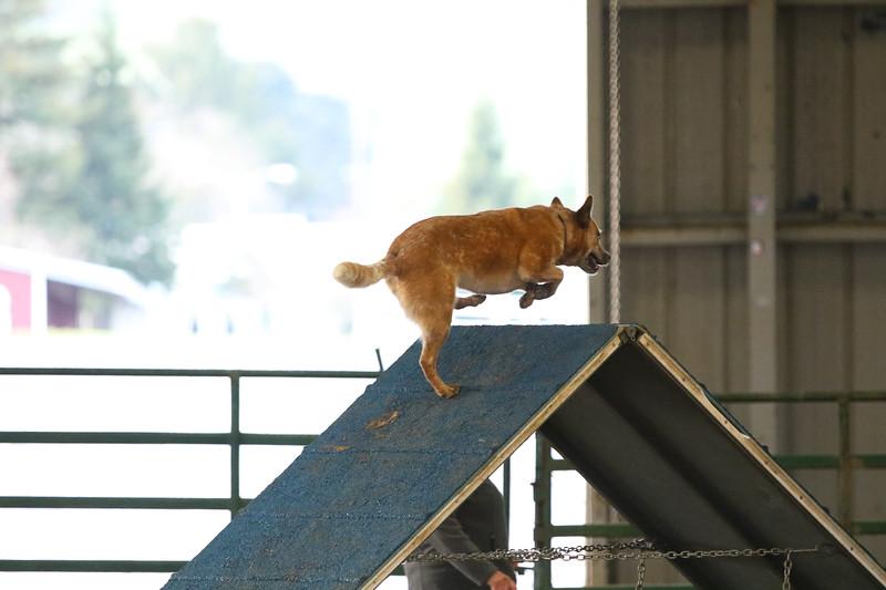 3-10-2019 Bloodhound-9111.jpg