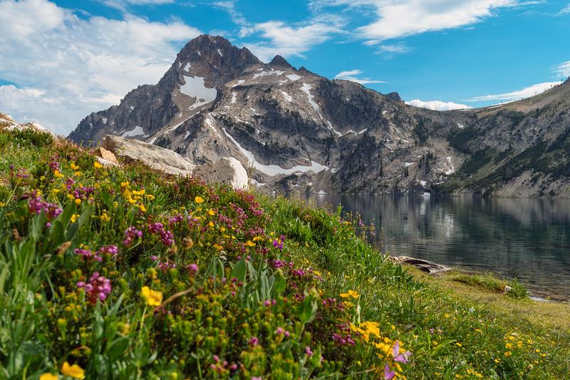 Wildflowers at Sawooth Lake, Sawtooth Lake National Recreation Area, Idaho