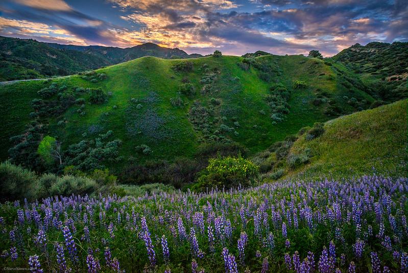Towsley_Canyon_Santa_Susana_Mountains_Wildflowers_Southern_California_DSC1179-2.jpg