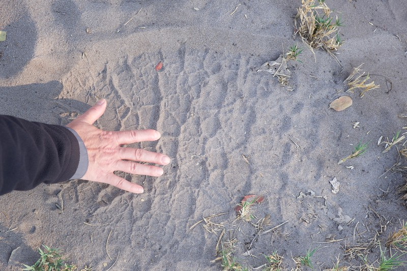elephant track, Shinde camp, Botswana