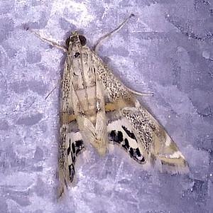 Moths - 2018