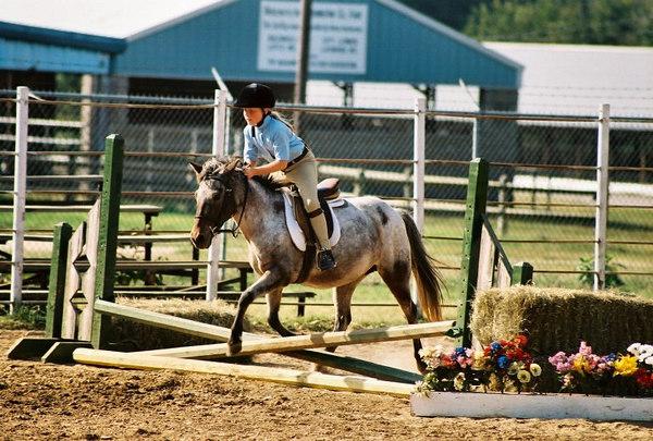 HUNTER/JUMPER HORSESHOW