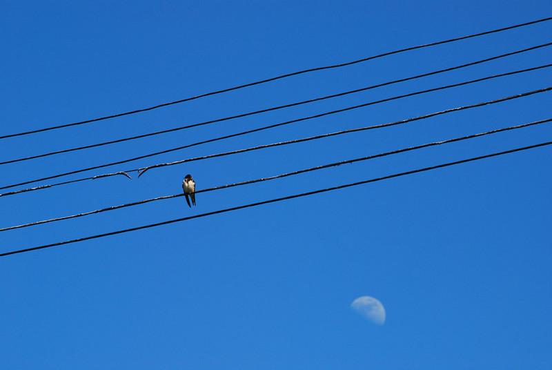 rising-moon.jpg