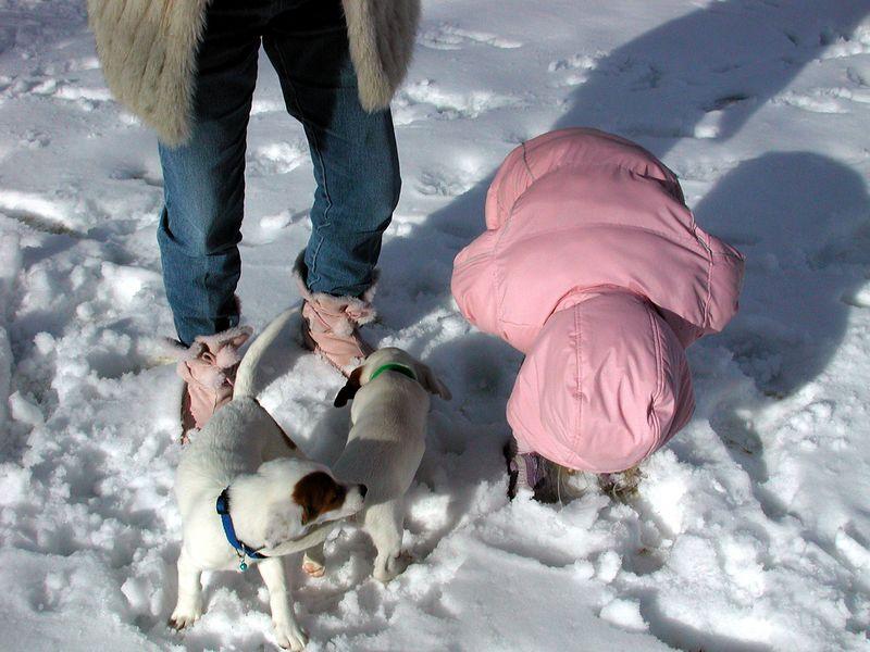 Feb 05- Puppies 001_edited.jpg