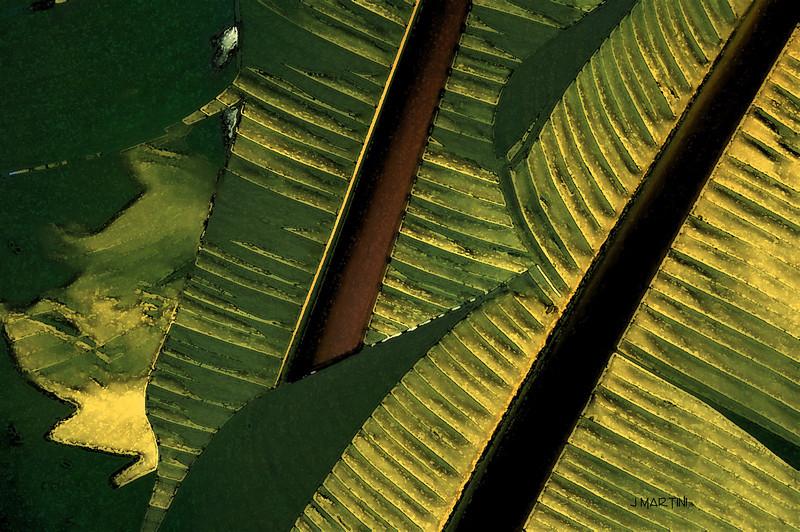 shade 4-10-2009.jpg